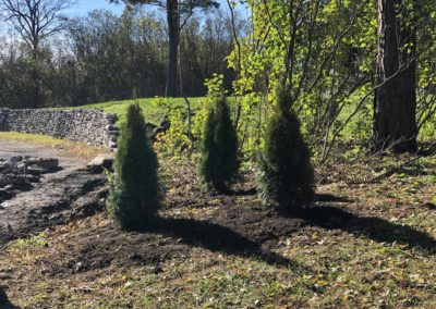 These recently planted cedars demarcate the east property line